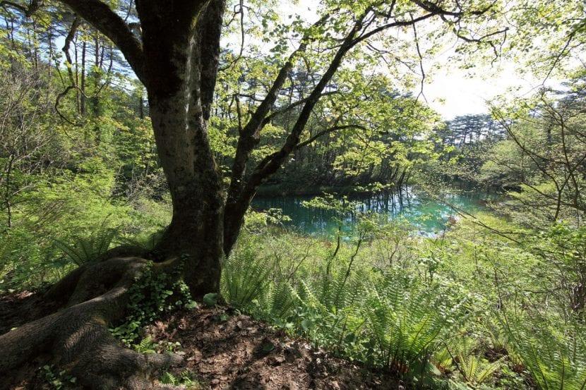 Bosque con lago