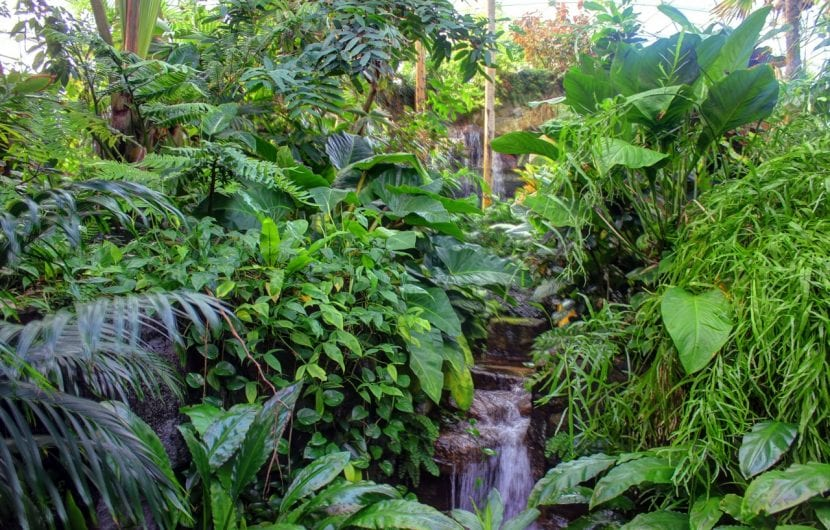 Plantas de un bosque tropical