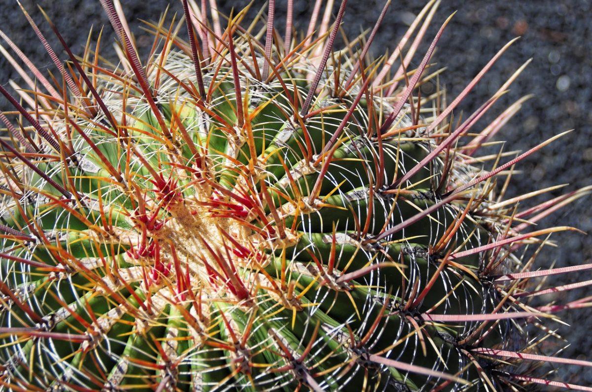 Descubre cómo cuidar un cactus