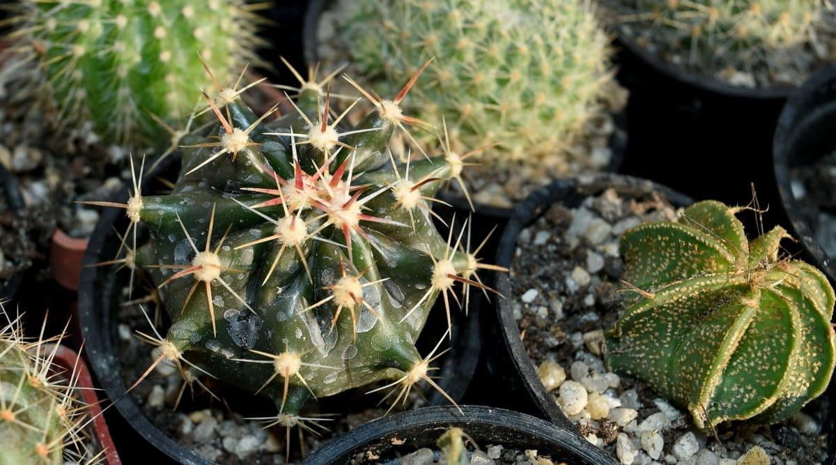 Los cactus necesitan sol y agua