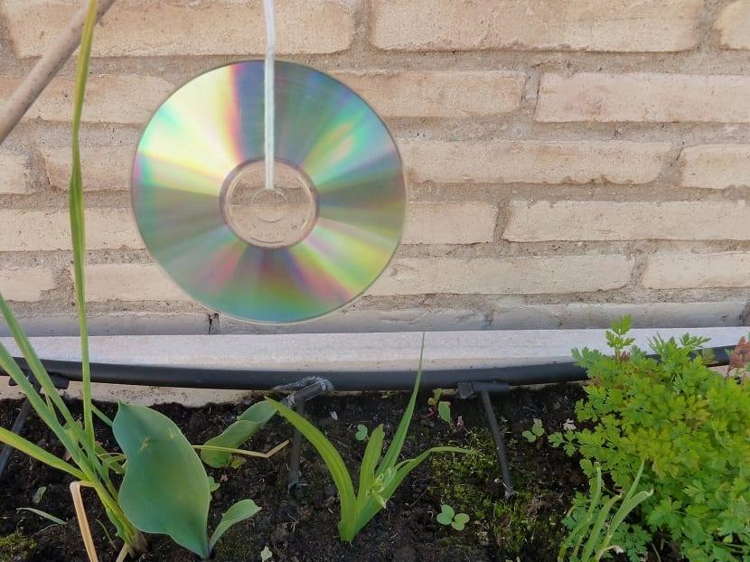 usar cds para espantar palomas