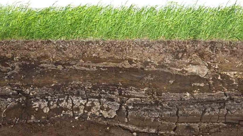 los suelos son fruto de los cinco factores formadores