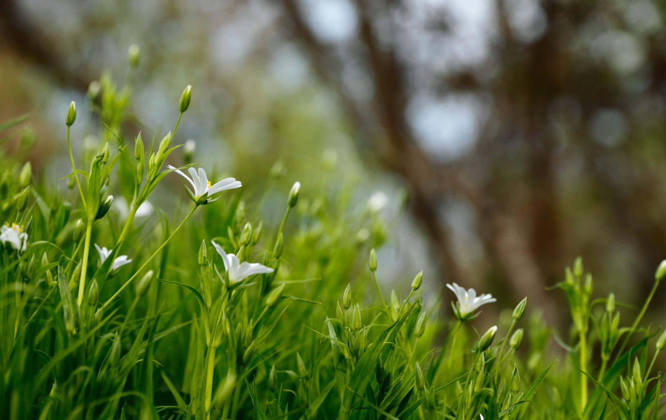 Flores blancas en un jardín