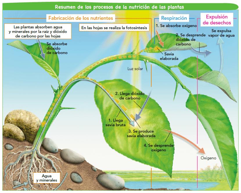 Funcionaes de las plantas