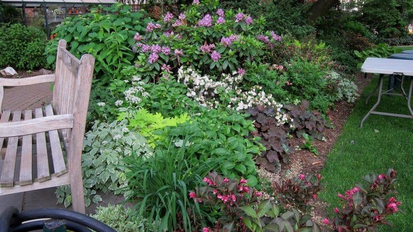 Jardín con plantas bajas