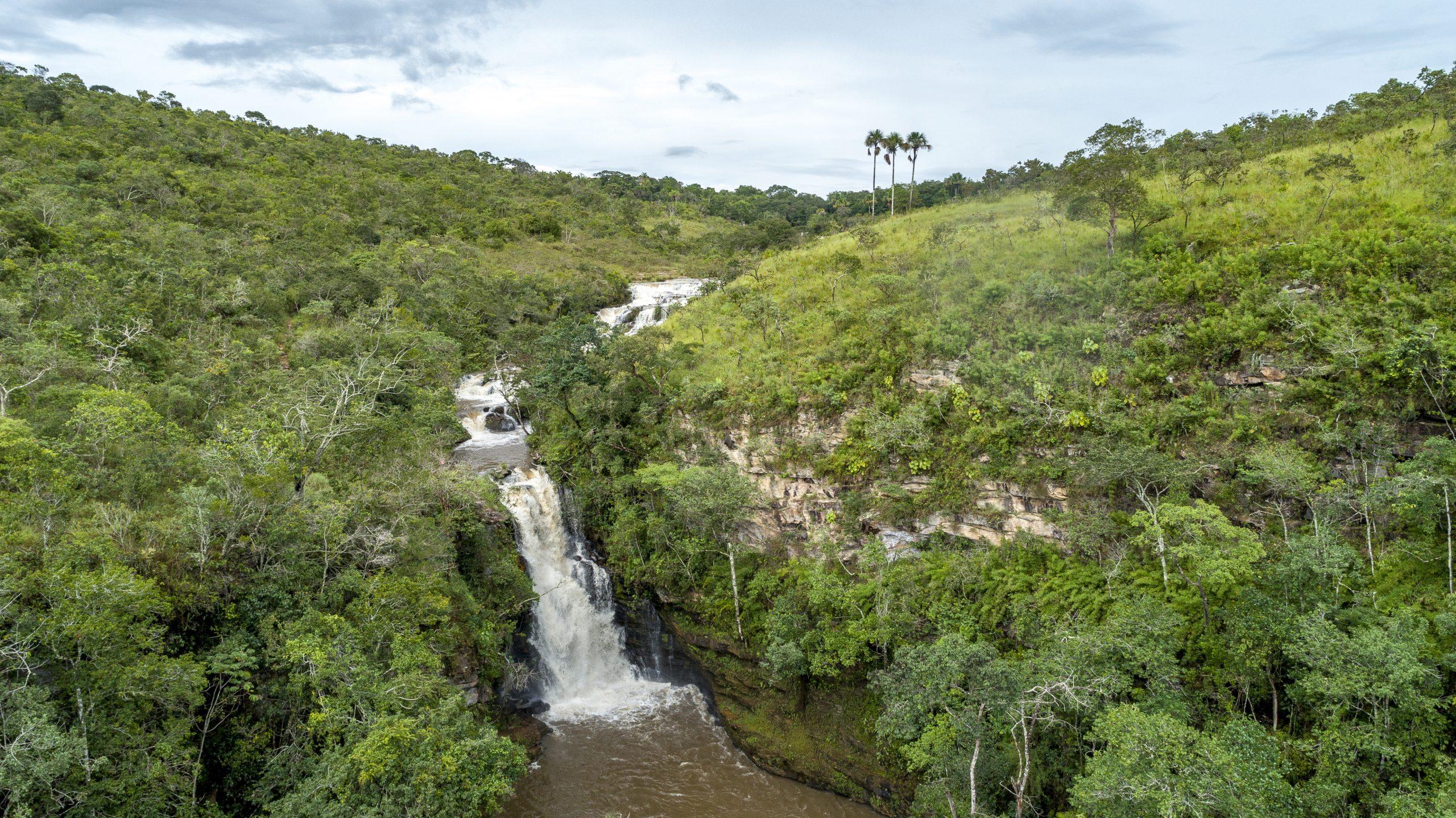 En la jungla hay muchos tipos de plantas