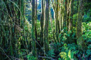 Hay muchos tipos de especies de plantas en una jungla