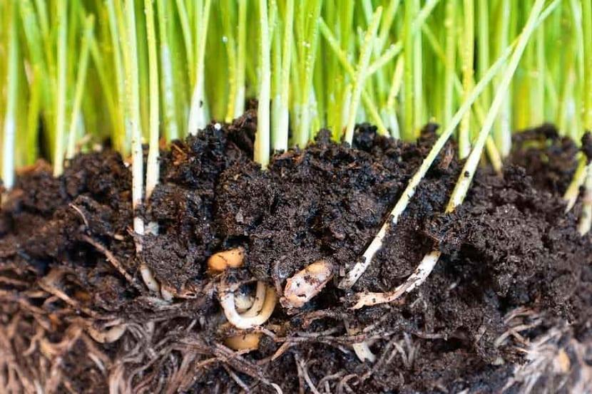 la cantidad de materia orgánica de un suelo define su fertilidad