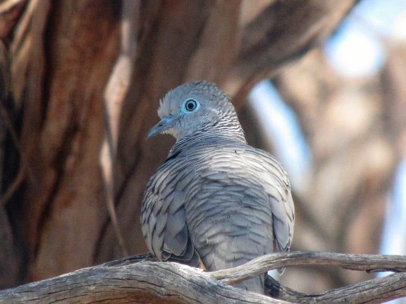 palomas en el jardín