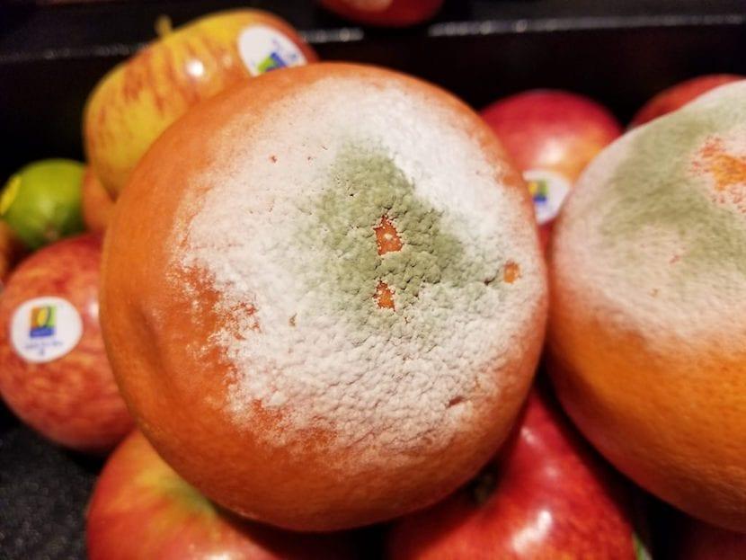 penicillium en naranja