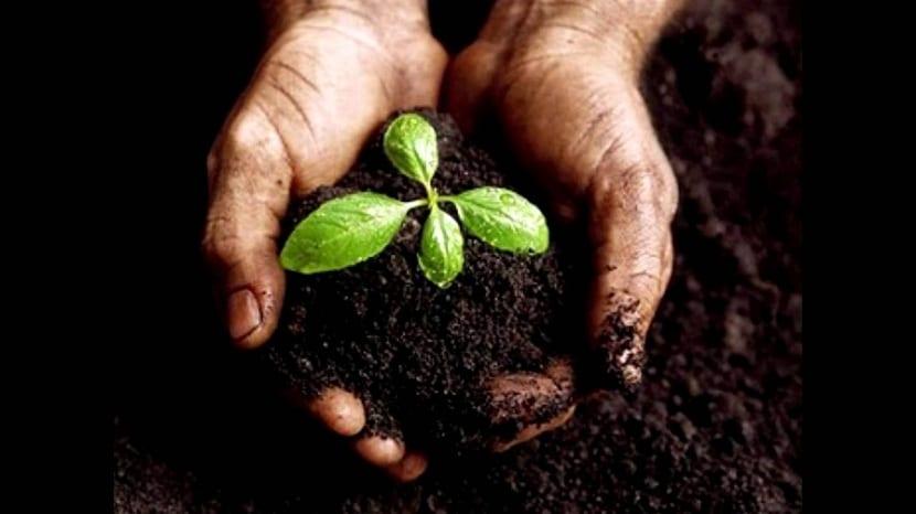 las características químicas de un suelo hacer cambiar el pH