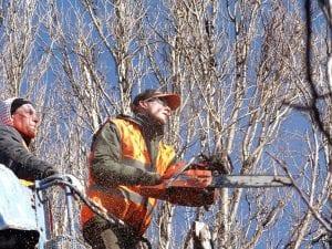 hombre en arbol talando una rama