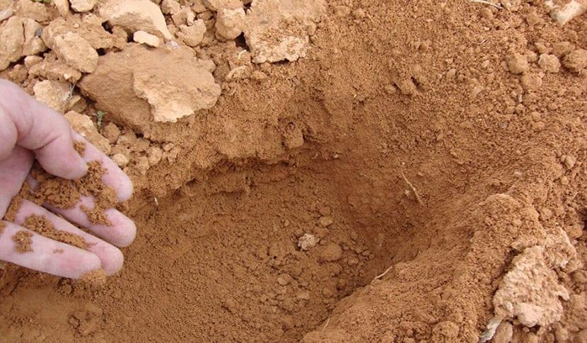 suelos arenosos