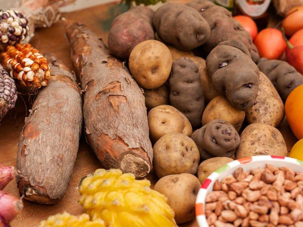 la patata la yuca son tubérculos
