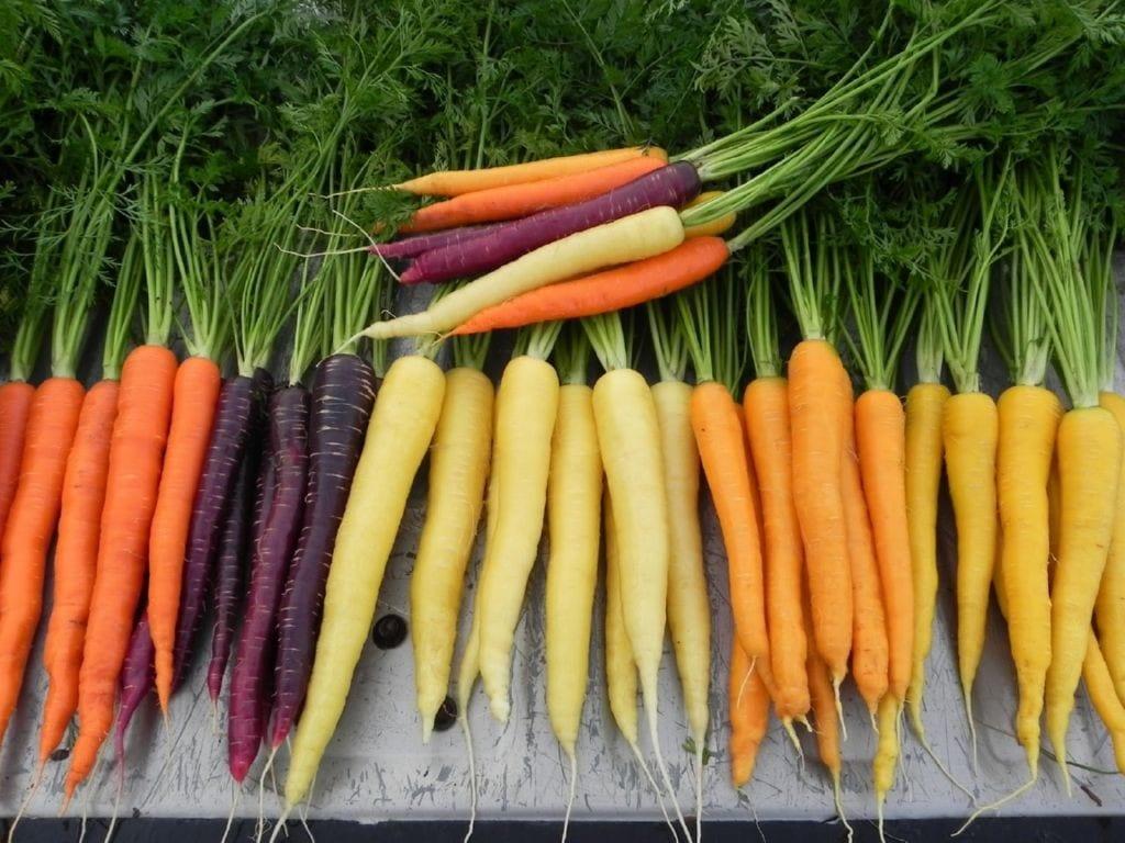 las zanahorias son conocidas en todo el mundo