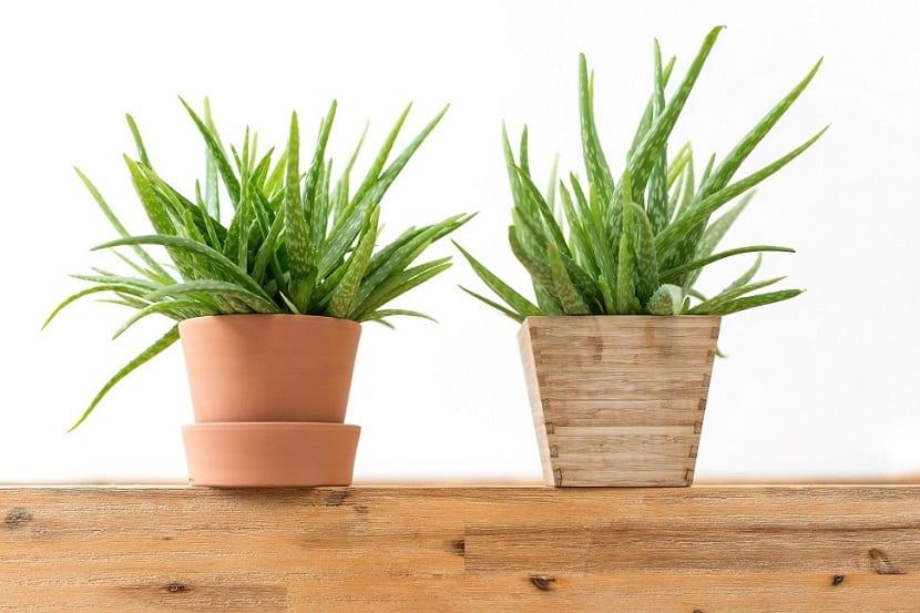 Qu plantas colocar en la oficina for Plantas decorativas para oficina