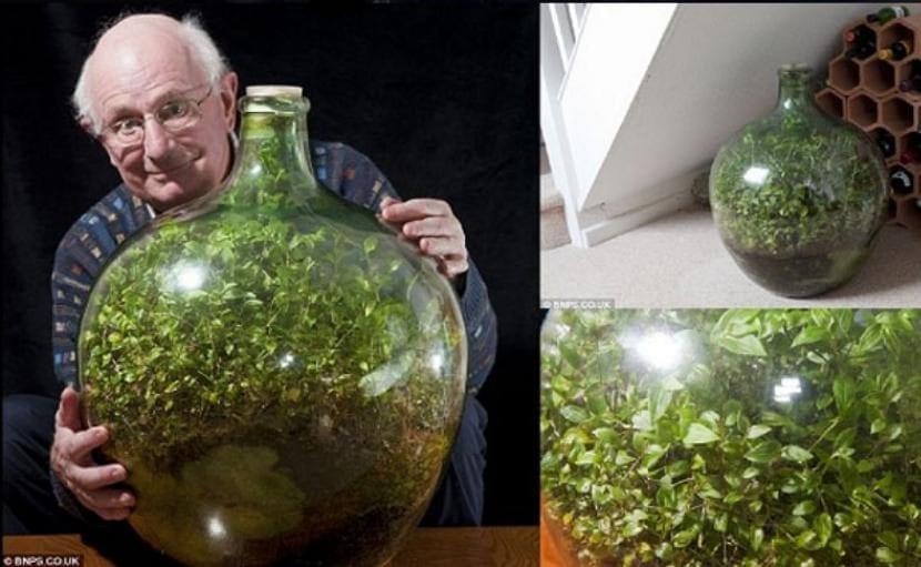 David Latimer con su jardín