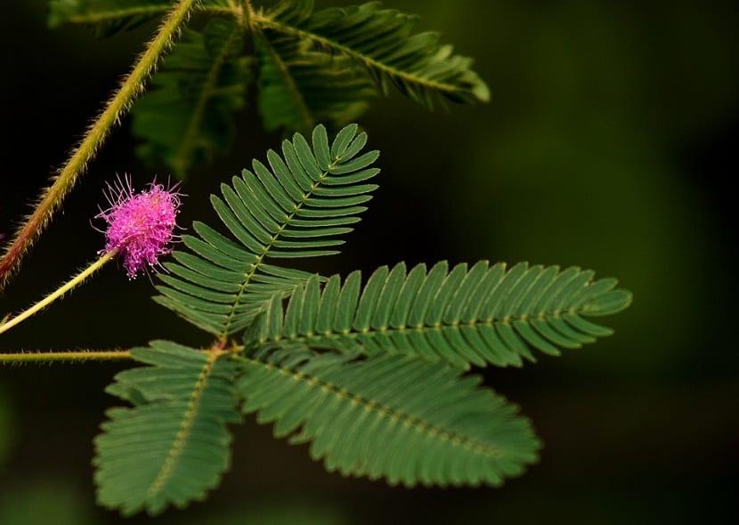 las plantas verdes aumentan la moral