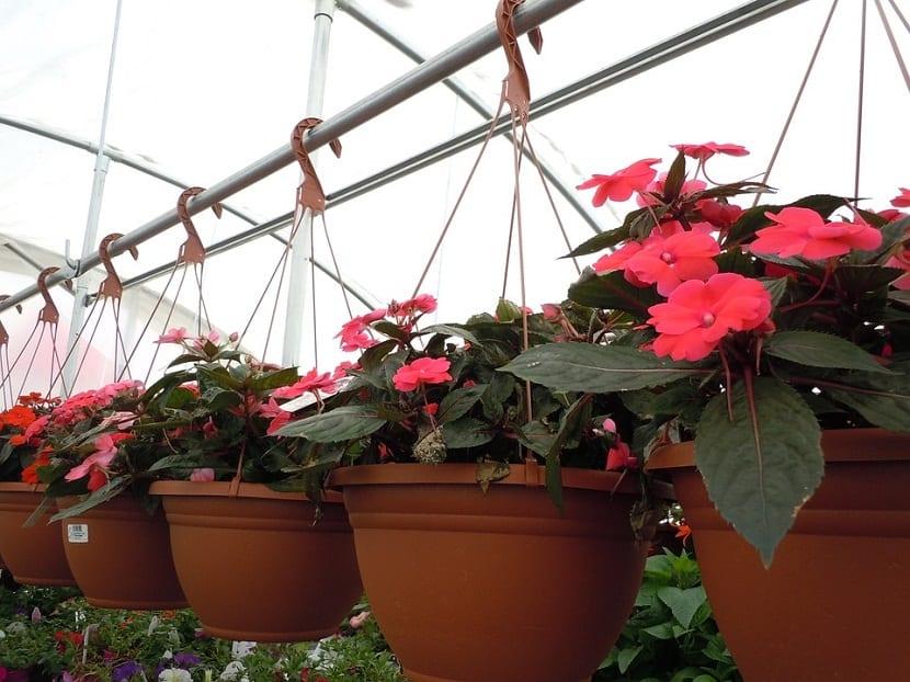 Ideas para decorar plantas a traves del uso de colgantes