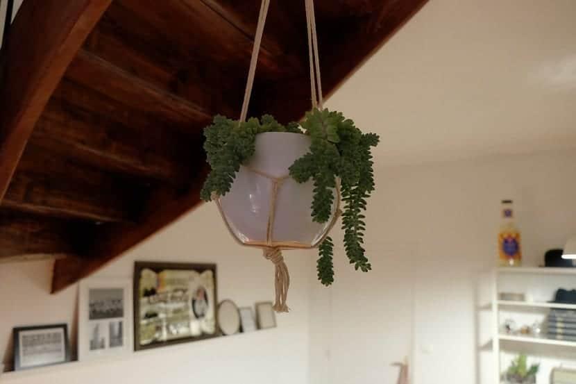 Colgar las plantas en las paredes y techos de nuestros hogares