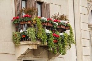 Diversas plantas en un balcón