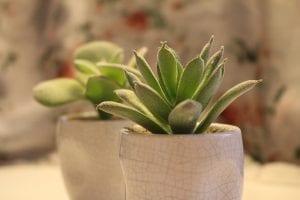 plantas para colocar en la oficina