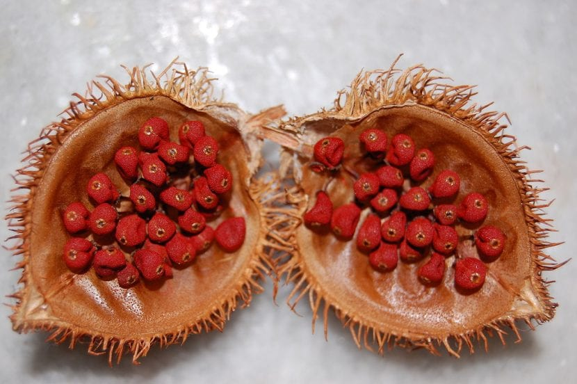 Fruto con semillas de achiote