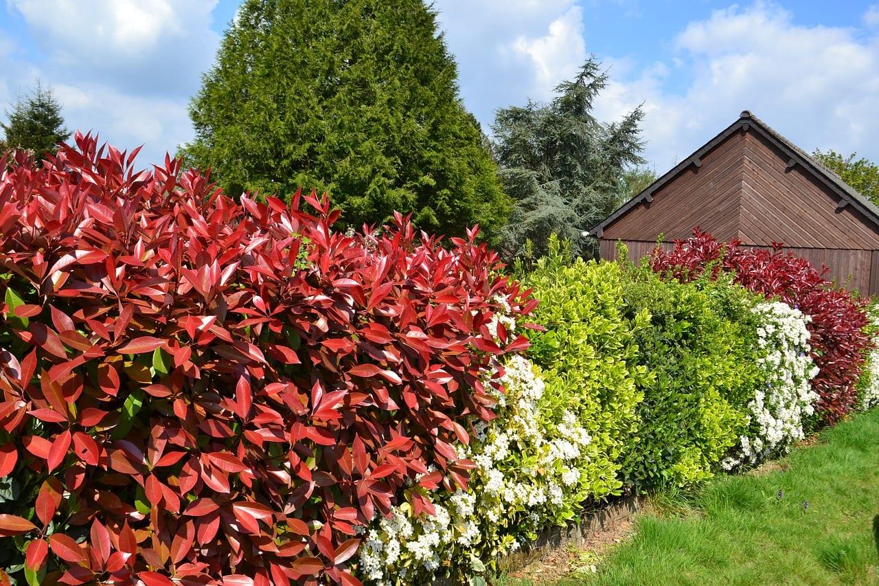 Seto de distintos arbustos