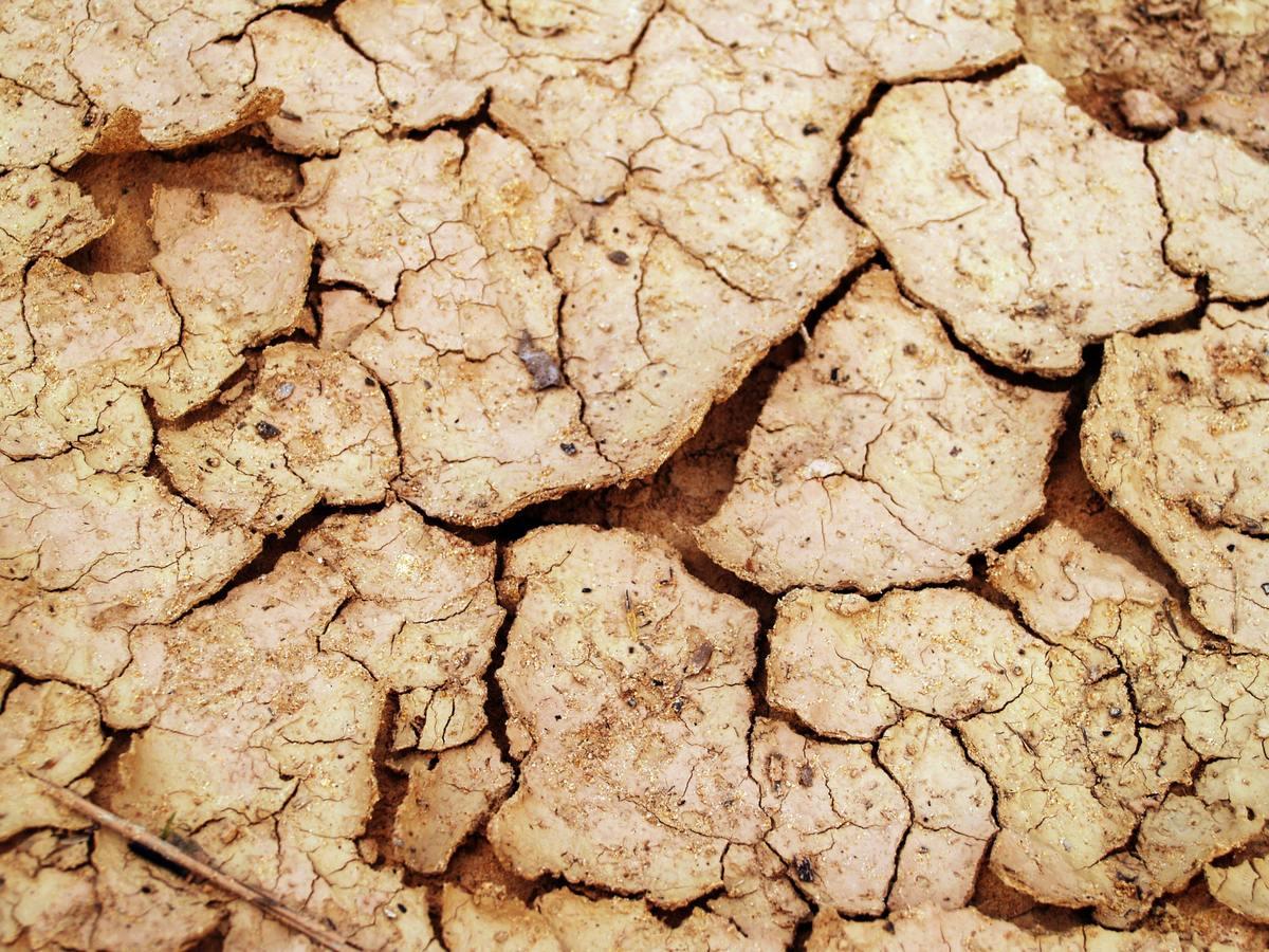 El suelo árido es un suelo incultivable