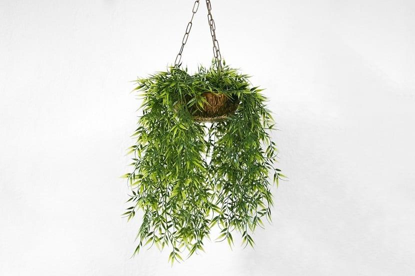 las plantas tienen diferentes usos