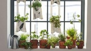 Crear un jardin en una ventana