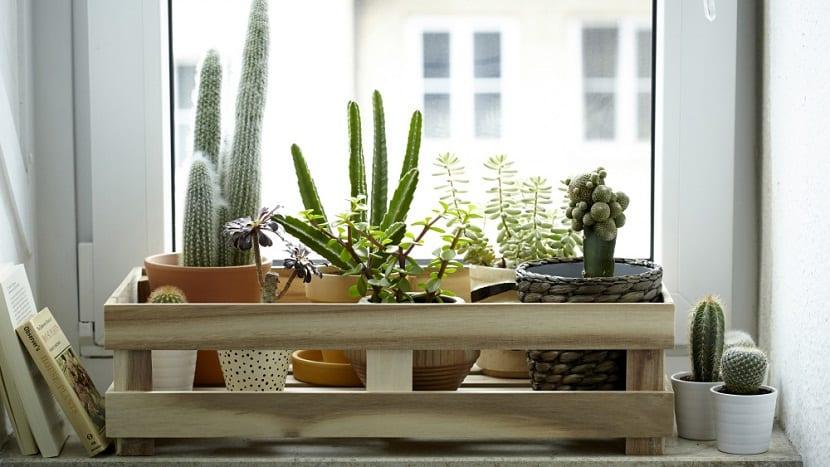 Crear un jardin en una ventana de una habitacion