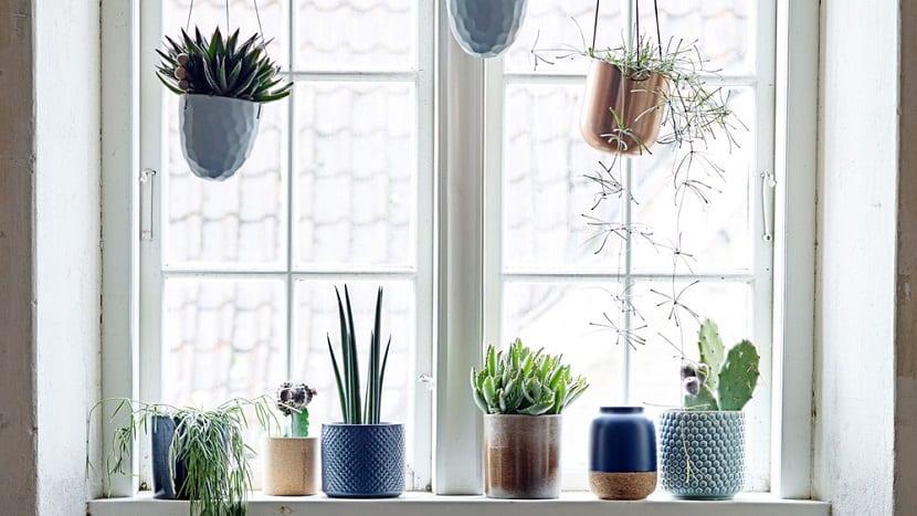 colocar plantas que cuelgan en la ventana