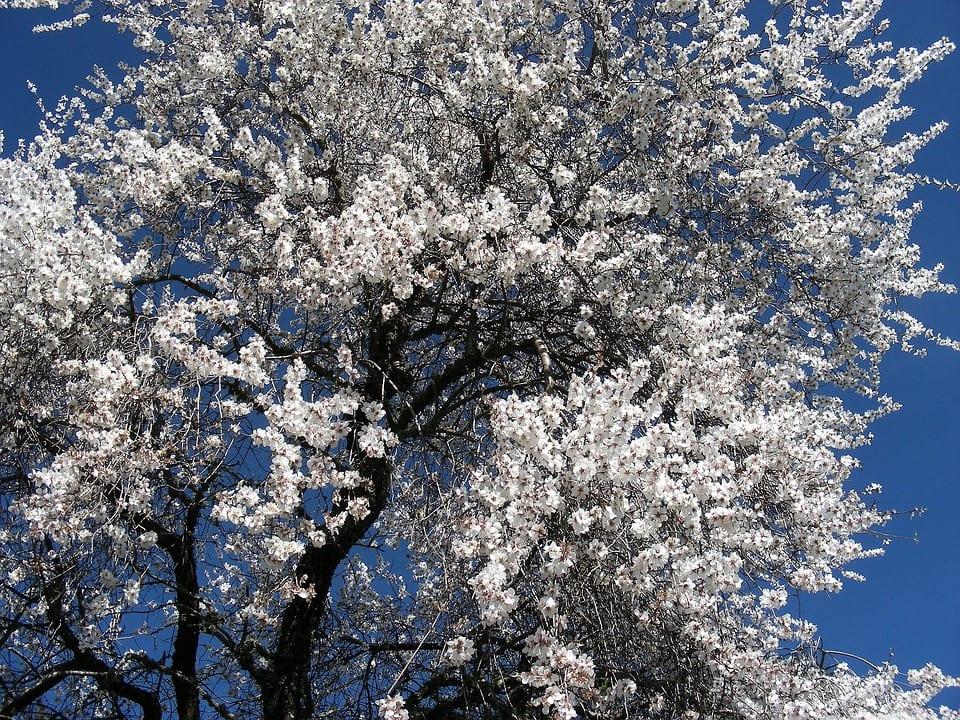 Tipo de flor y reproduccion