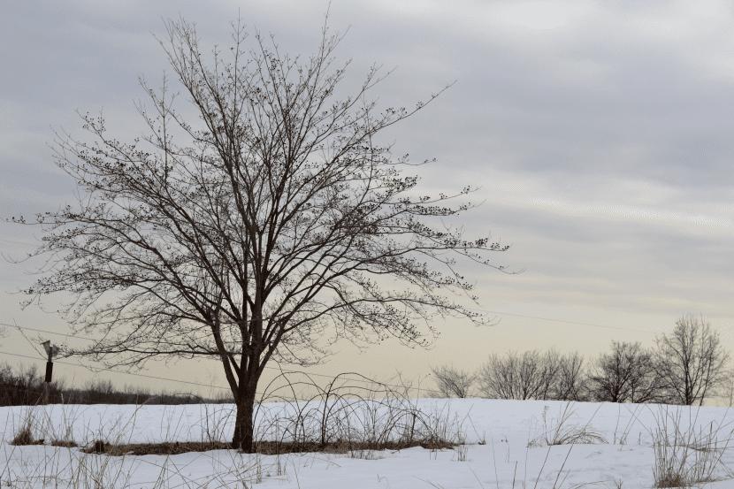 Los árboles de climas templados y fríos hibernan con la llegada de las heladas