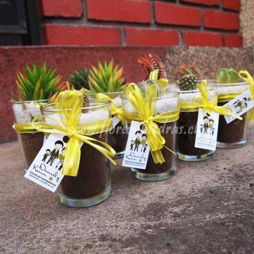 Cactus y crasas en vasos de cristal