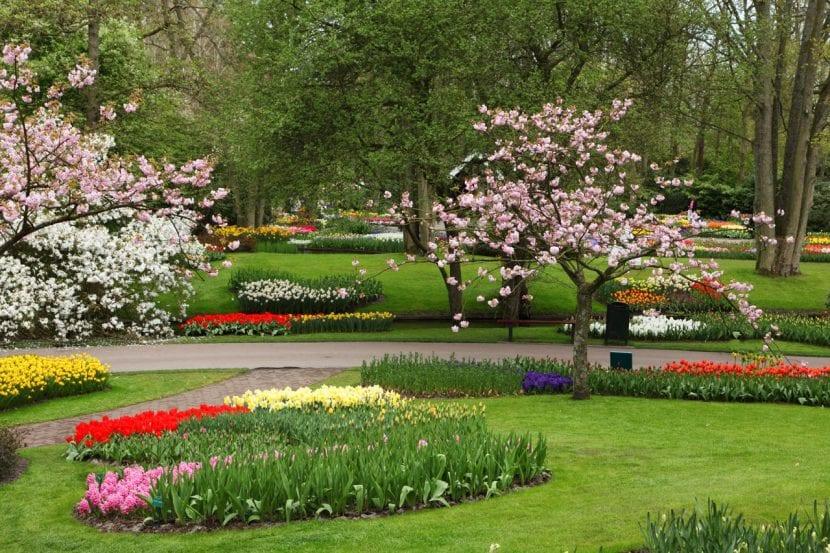 Planta bulbosas en tu jardín de flores