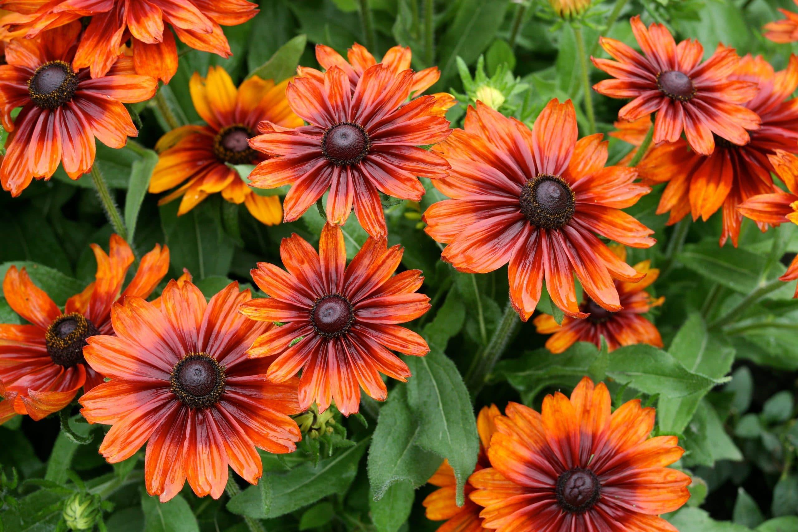Planta flores de colores alegres para dar vida al jardín
