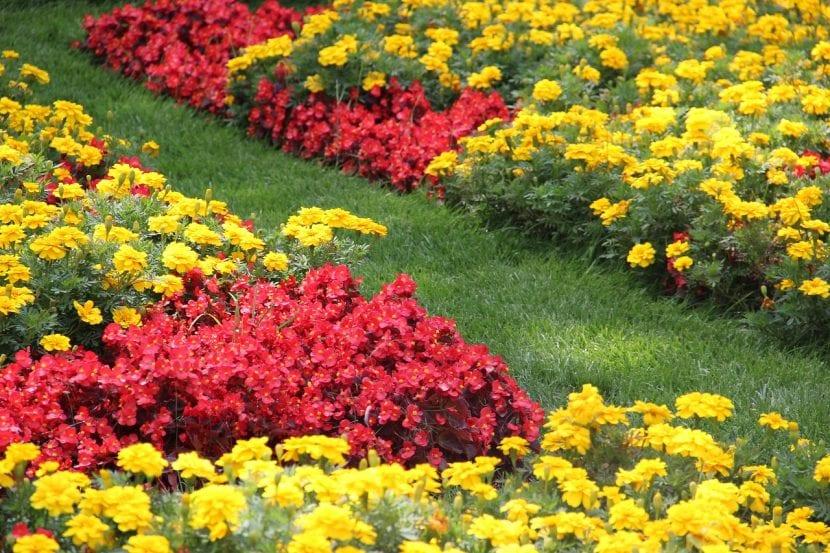Combina los colores para que te quede un jardín perfecto
