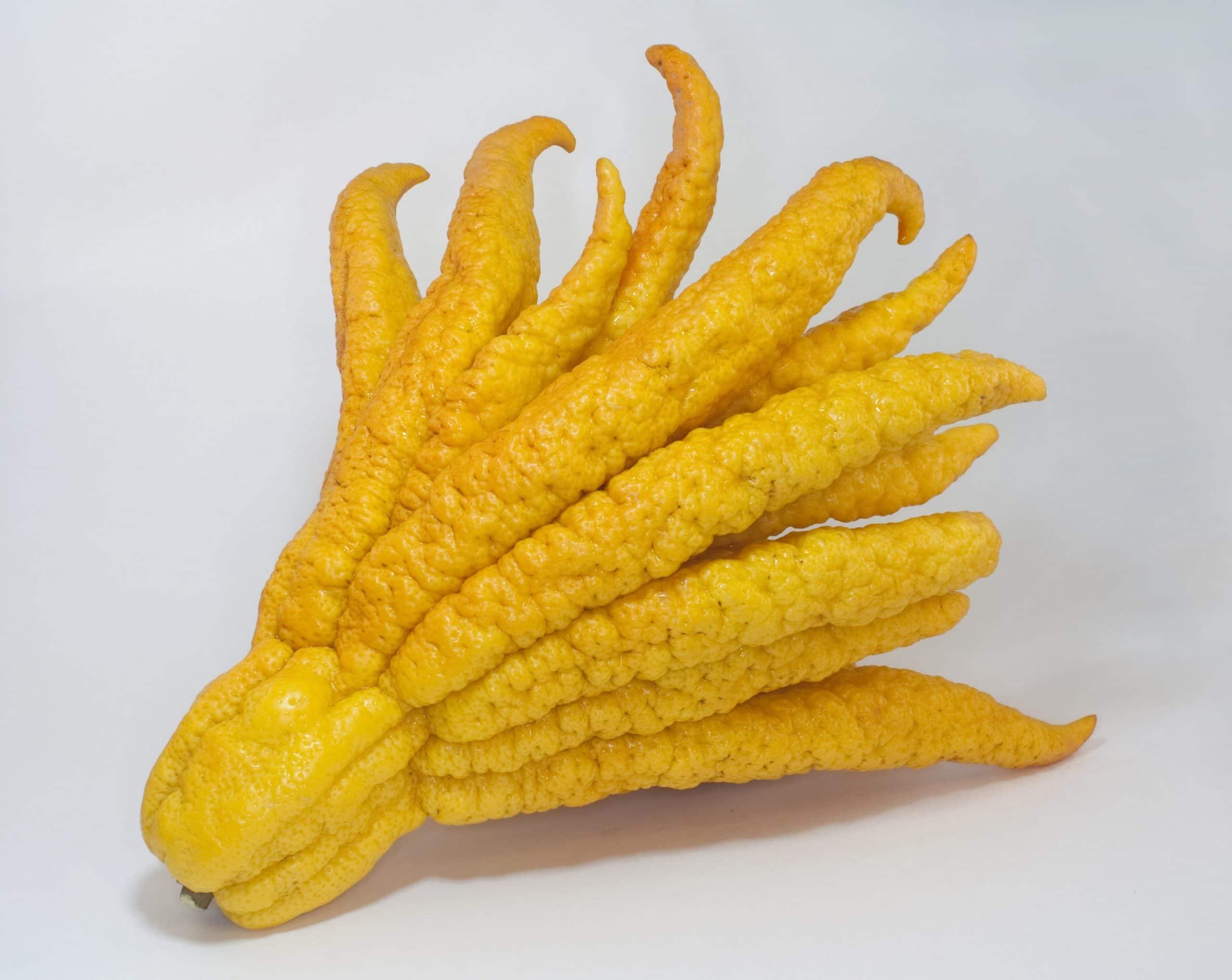 Curioso limón 'mano de Buda'