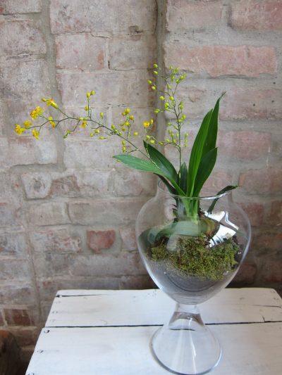 Las orquídeas no pueden vivir en vasos de cristal