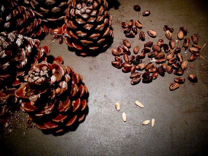 piñones pinus pinea
