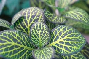 Las plantas de interior necesitan riegos muy espaciados en invierno