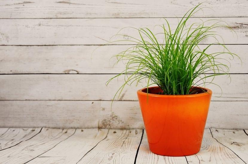 Evita mover tu planta de sitio para que no lo pase mal