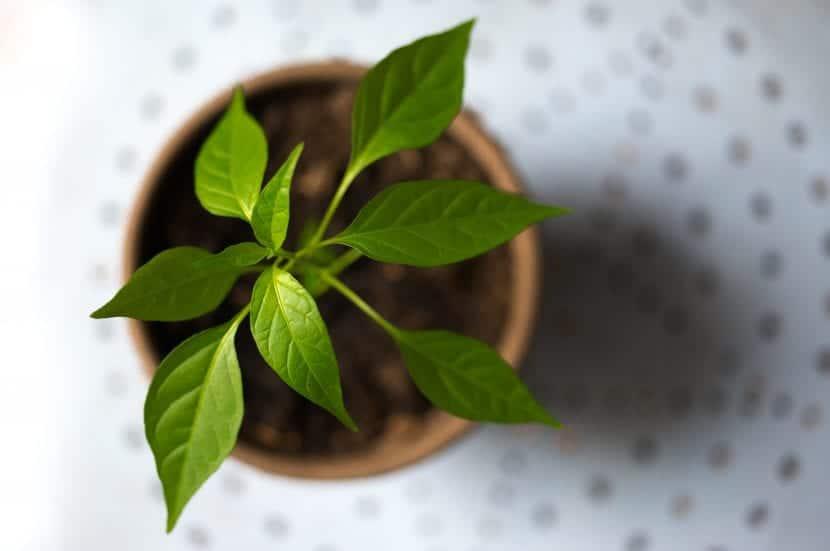 Las plantas jóvenes en maceta necesitan más protección y mimo