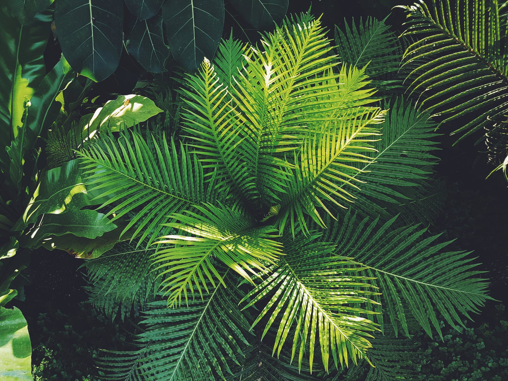 Las plantas suelen tener las hojas verdes