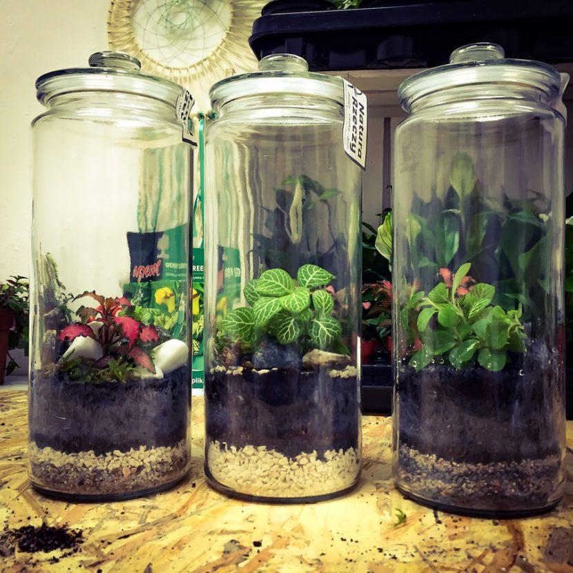 Qué Plantar En Vasos De Cristal Jardineria On