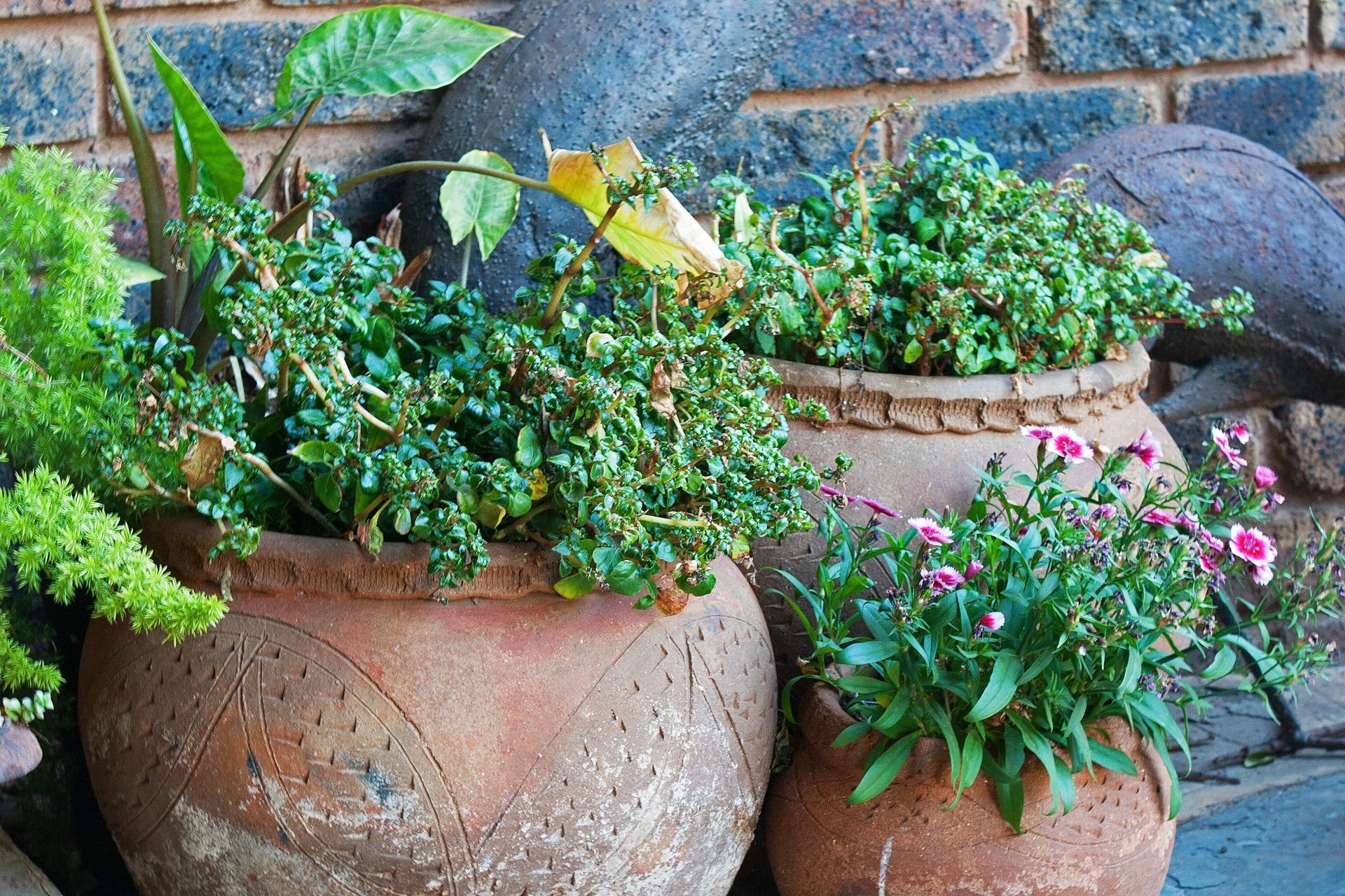 Las plantas en maceta necesitan cuidados especiales