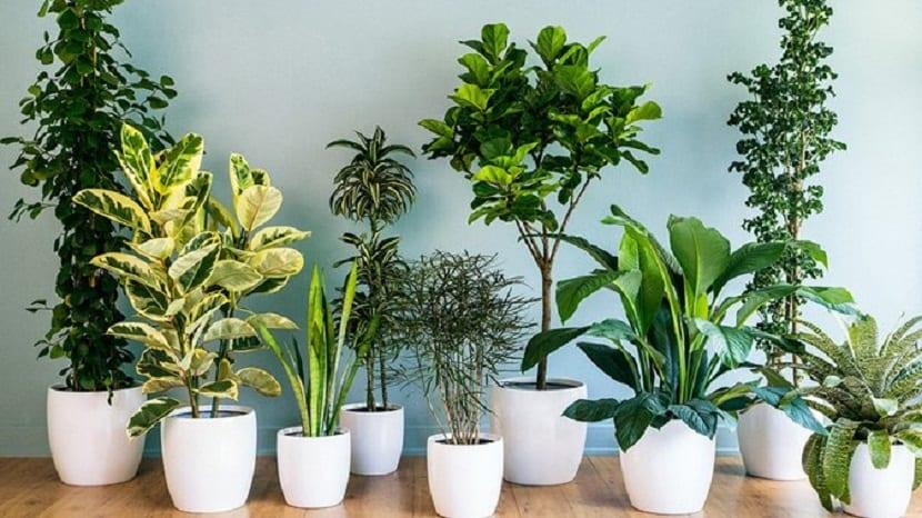 4 consejos para mantener tus plantas verdes durante ms tiempo - Plantas Verdes De Interior