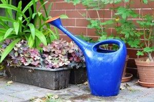 usar hidrogel en las plantas